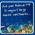 Ask Your federal MP to support large marine sanctuaries